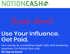 Notion Cash Review